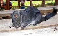 Rat Elimination Service