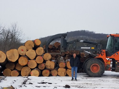 North American Oak Logs